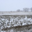Snow falling on the farm — Stock Photo