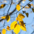 Stock Photo: Fall foliage colors