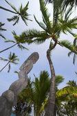 Idole et palmiers — Photo