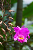 Orchid bloom — Stock Photo