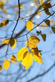 Fall foliage colors — Stock Photo