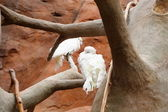 попугаи — Стоковое фото