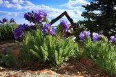 Wildflowers in bloom — Stock Photo