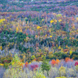 Fall foliage colors — Stock Photo