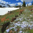 Alpine meadows in Wyoming - Stock Photo