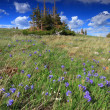 Alpine meadows in Wyoming — Stock fotografie