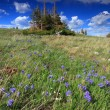 Stock Photo: Alpine meadows in Wyoming