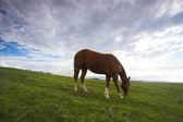 Caballo y paisaje verde — Foto de Stock