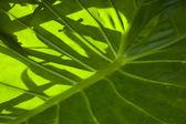 Leaf — Stockfoto
