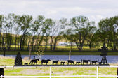 Cowboy land — Stockfoto