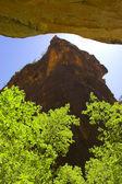 Trees inside canyons — Stock Photo