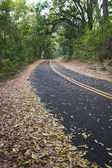 Green forest and road — Stock Photo