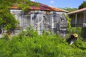 Architecture tropicale — Photo