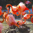 Flamingo on nest — Stock Photo #17641621