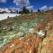 Alpine meadows in Wyoming — Stock Photo