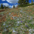 Alpine meadows in Wyoming — Foto de Stock