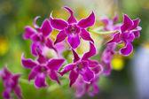 Flower show — Stock Photo