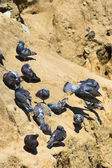 Doves — Stock Photo
