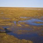 Arctic tundra from air — Stock Photo