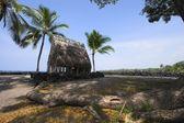 棕榈树和老庙 — 图库照片