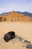 Dog of Taos — Stock Photo
