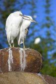 Vogels — Stockfoto