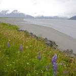 Alaska wetland — Stock Photo #2323521