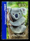 Australia Koala Bear Postage Stamp — Stock Photo