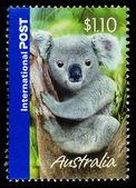Australia Koala Bear Postage Stamp — Stock Photo