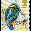 Britain Wild Bird Postage Stamp — Foto de stock #22807932