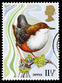 Britain Wild Bird Postage Stamp — Stock Photo