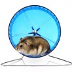 Dwarf Hamster — Stock Photo