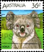 Australia postage stamp. Koala. — Stock Photo