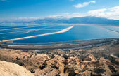 Pools plants Dead Sea. — Stock Photo