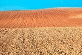 Dry soil. — Stockfoto