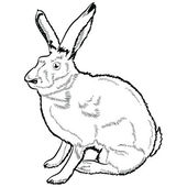 Hare lineart — Stock Vector