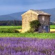 Lavender in the landscape — Stock Photo #12780127