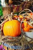 Autumn spirit — Stock Photo
