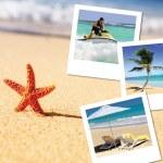 Sea starfish and pics — Stock Photo