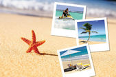 Sea starfish and pics — Stock Photo