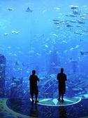 Large Aquarium — Stock Photo