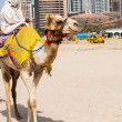 Stock Photo: Camel in city