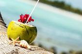 Kokosnoten op het strand — Stockfoto