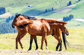 Horses in the landscape — Stock Photo