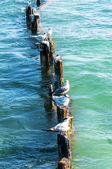 Wild seagulls — Stock Photo