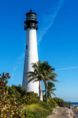Cape florida — Stockfoto