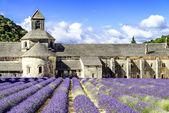 Abbey of Senanque — Stock Photo