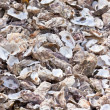Oysters shells at fish market — Stock Photo