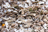 Oysters market garbage — Stock Photo