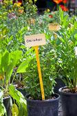 Homegrown herbs seedlings — Stock Photo